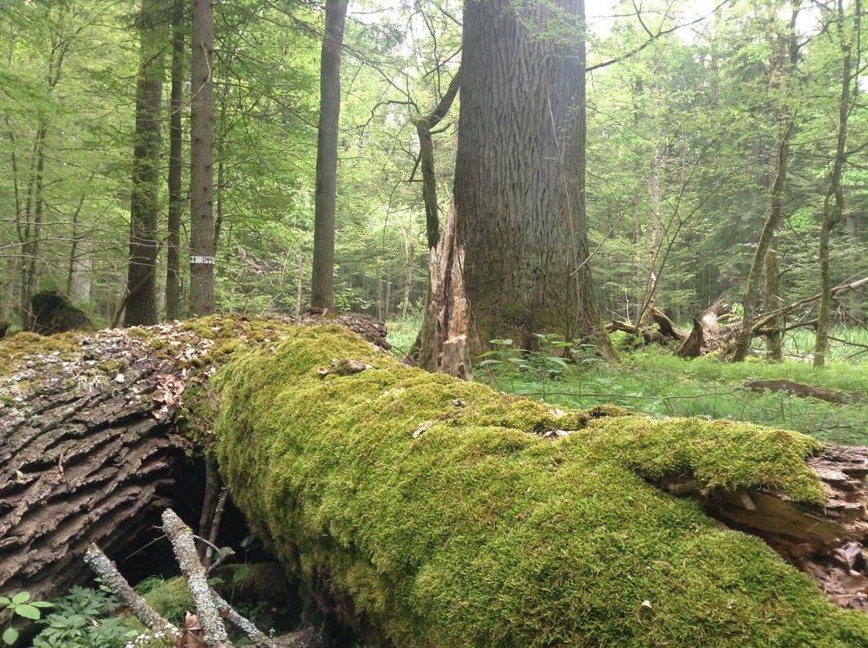 Зниклу пенсіонерку з Клевані знайшли мертвою в лісі