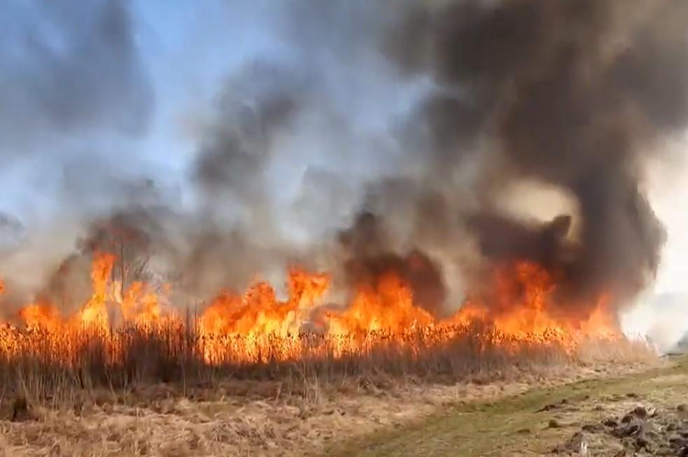 Палія не знайшли: на Рівненщині палала суха трава (відео)